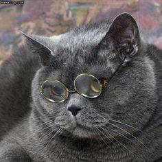 Brimley kitty!