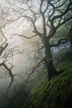 The Peaks by Matthew Dartford Photographer's Instagram   Facebook   ETSY   Twitter   Personal Website