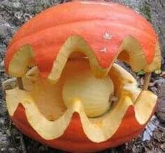 Pumpkin pearl