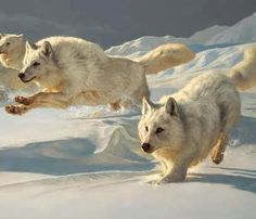 Come with me and run with the pack let's hunt down our quarry and we'll snack!