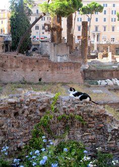 Torre Argentina Cat Sanctuary ~ Rome, Italy