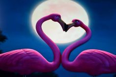 gnomeo and juliet flamingo - Google Search