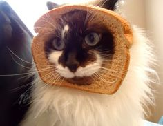 """crookedlane:  Cat Breading in Three Easy Steps — Cute Overload  """