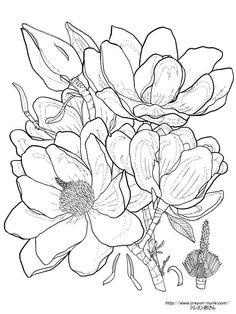 赤モクレンの植物画の塗り絵の下絵、画像