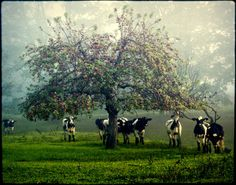 Prie Obels (By the Apple tree), Lithuania | Photo credit: Deividas Narutavičius