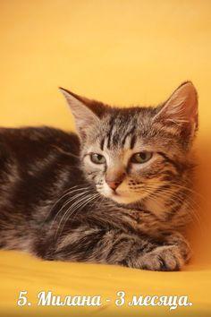 Милана — Animalsburg.ru Анималсбург #кошка  #кошкаищетдом  #котенок  #котенокищетдом #котенокищетхозяина