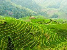 Los arrozales de la cola del dragón en Longhseng. Dazhai