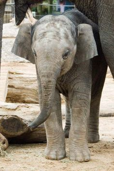 Save more with Houston zoo coupons Houston Attractions, Houston Zoo, Galveston, Stuff To Do, Save Wildlife, Texas, Zoos, Field Trips