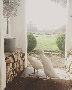 mabel's ᴹ ᴬ ᵞ ᴮ ᴱ farm Country Life, Country Living, Country Houses, Country Charm, French Country, Farm Animals, Cute Animals, Runner Ducks, Future Farms