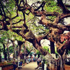 El Salvador - Ruta de las Flores: Parque Central de Concepcion de Ataco
