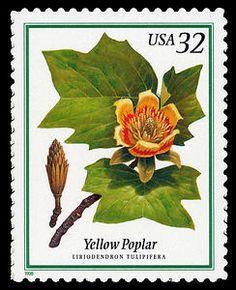 32c Yellow Poplar single