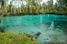 Three Sisters Spring - 1502 SE Kings Bay Dr, Crystal River, FL 34429 (352) 563-2088  Great place to kayak and you can see a TON of manatees! Total Kayak time is 4hr to 8 hours! Get there early as kayak rentals are due at 4PM. located in the heart of Crystal River, Florida.  http://www.visitthreesisters.com/ http://www.fws.gov/refuge/Crystal_River/wildlife_and_habitat/Springs.html