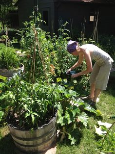 Maybe you are already familiar with the concept of companion planting. It is a phrase that is tossed around frequently in many gardening circles. At its core, it is the grouping together of plants that will be beneficial, in some way, with one another. The benefits of companion planting may include healthier plants, less use of pesticides, improved yields, better flavor, less frequent watering and more efficient use of your personal garden space. Lose the notion that a garden has to be a…