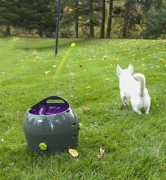 The PetSafe Automatic Ball Launcher is an automatic fetching machine that can be used by dog and owner or just the dog. Safe, fun and totally versatile!