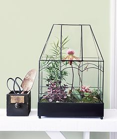 A roomy Wardian case; pebbles or aquarium gravel; activated aquarium charcoal; potting mix; sheet moss; a mister with distilled water; and at least five plants. Real Simple used a parlor palm seedling, a 'Red Splash' polka dot, a lady's slipper orchid, a 'Pink Starlight' earth star, a Pearcea, and miniature ivy. Also consider a heart fern, a mosaic plant, a dwarf begonia, creeping fig, and baby's tears.