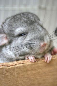 look at his cute little feeeeeeet!