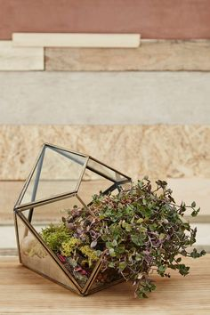 Shop Urban Grow Gold Diamond Terrarium Planter at Urban Outfitters today. Potted Plants, Garden Plants, Cactus Plante, Urban Outfitters, Showroom Design, Interior Design, Christmas Gifts For Women, Nyc, Decorative Cushions