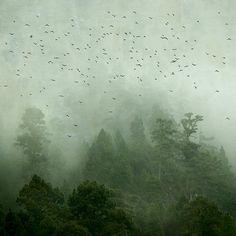 Rosa Basurto.  Forest