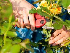 Kletterbogen Für Rosen : 43 besten stauden und rosen bilder auf pinterest blumenbeete