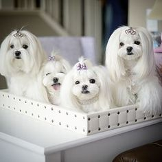 Hello Lovelies!  :)///// Well, be still my heart!  They are so cute I can't stand it! nk
