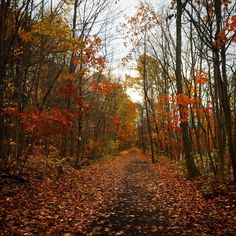 The #WallKillRailTrail in the fall #RosendaleNY