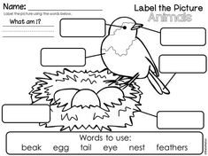 Worksheet for labeling the parts of an owl: eyes, beak