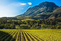 Advini acquires a majority share of Stellenbosch Vineyards