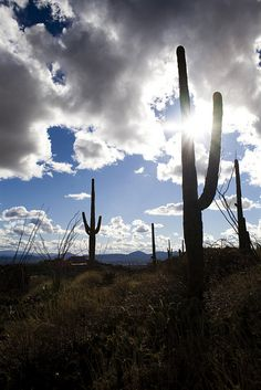 Finger Rock Trail ~ Tucson, Arizona. Tucson might be my new and temporary home soon :)
