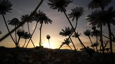 Celestial, Sunset, Plants, Outdoor, Have A Good Night, Good Nite Images, Good Morning Images, Good Night Msg, Spirit Guides