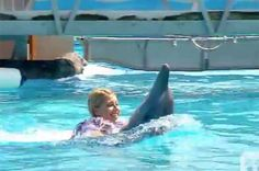 Elderly Dolphin With Cancer Forced To Drag Tourists On His Back