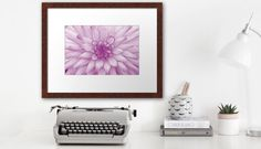 Dahlia Radiant Orchid Print/Poster/Canvas - JUSTART on Redbubble  #justart #rb #redbubble #dahlia #wallart #poster #canvas #print #floral #flower #pink #purple #white #botanical #radiantorchid