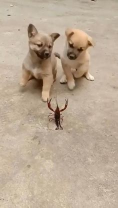 Cute Animal Memes, Cute Animal Videos, Animal Jokes, Funny Animal Pictures, Super Cute Animals, Cute Little Animals, Cute Funny Dogs, Cute Funny Animals, Best Dogs For Kids