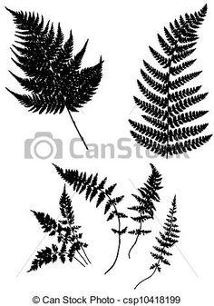 Eps Vector, Vector Graphics, Wall Stencil Designs, Silhouette Tattoos, Flower Pattern Design, Dainty Tattoos, Medical Illustration, Ferns, Art Images