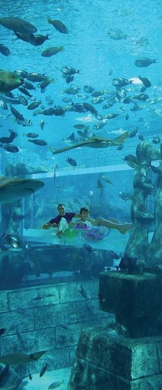 """Surrounded By Fish!"" At: Atlantis, The Palm, Dubai. Oh The Places You'll Go, Places To Visit, Wonderful Places, Beautiful Places, Underwater Hotel, Visit Dubai, Dubai Travel, Hotels And Resorts, Luxury Hotels"