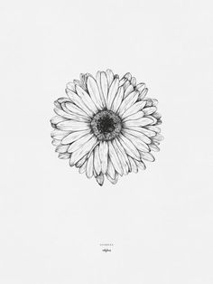 "Drawing of the gerbera flower by inkylines. ""Because of you, everything is more beautiful"", that's where the gerbera stands for."