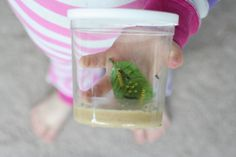 Raising Butterflies (and using life cycle of a butterfly manipulatives) from Fun at Home with Kids