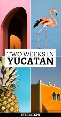 2 Weeks in the Yucatan Peninsula - The Yucatan Peninsula is not an off the beaten path destination… and for good reason! Mexico Vacation, Cancun Mexico, Mexico Travel, Spain Travel, Mexico Destinations, Travel Destinations, Merida, Road Trip, South America Travel