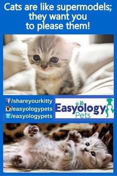 #Cats are like Supermodel; they want you to please them. @easyologypets