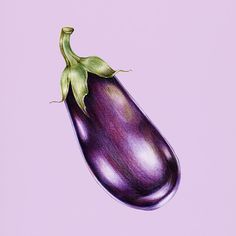 Hand drawn watercolor of eggplant Blending Colored Pencils, Colored Pencil Artwork, Pencil Art Drawings, Realistic Drawings, Colorful Drawings, Vegetable Drawing, Vegetable Painting, Fruits Drawing, Food Drawing