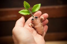 CUTE Miniature Mini Mandragora Mandrake root creature specimen