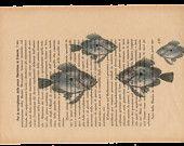 Pag.43, Acquario di pesci sanpietro.Posizione pagina: orizzontale.