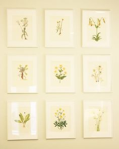 Love the idea to take apart an illustrated book and frame the images.  Do with Haeckels images!
