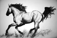 Horse Drawings | na Blog.cz