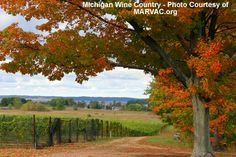 Top 10 North American Wine Destinations - Traverse City, Michigan  Traverse City  The grapes for these sinful wines come from the shores of Lake Michigan. Most of the Traverse City vineyards sit on the Old Mission Peninsula, which is protected from the harsh winters by Lake Michigan. The vineyards offer a variety of wines that include Rieslings, Pinot Noirs, Merlots and many other varieties of fruit wines.  Read more: http://www.toptenz.net/top-10-u-s-wine-destinations.php#ixzz2Ow3qYiqI