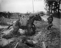 ANIMALS WAR 1914 - 1918 (Q 5941)     Battle of Pilckem Ridge. Shell-carrying pack mules moving forward through the mud. Railway line in background. Near Ypres. 1 August 1917.