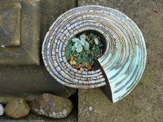 Spiral planter, Stoneware, by Gordon Cooke Bottle Vase, Bottles, Class Room, Ceramic Planters, Clay Ideas, Ceramic Art, Garden Art, Vases, Spiral