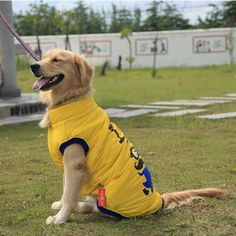 Pet clothes Yellow Golden retriever samoyed husky big dog clothes autumn winter coat jacket