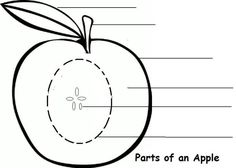 Parts of the Apple Learning Activity