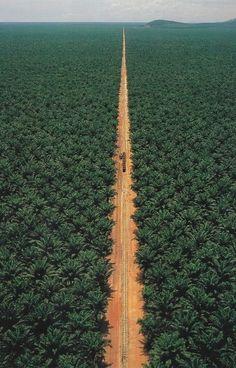 //\\ CONGO jungle railway