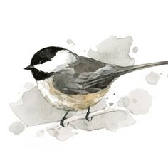 Chickadee watercolor                                                                                                                                                                                 More